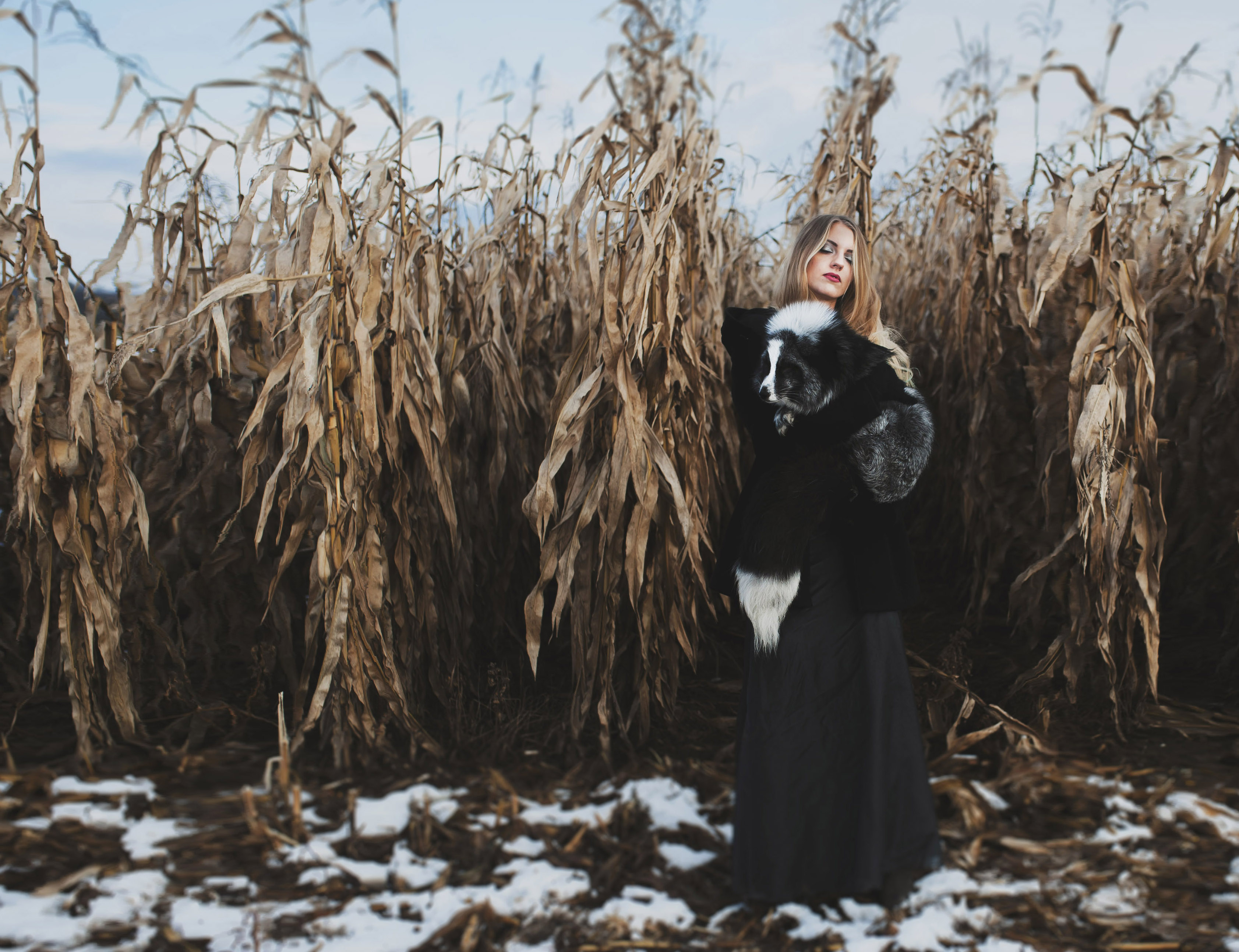 the fairytale of a girl who found a fox in a corn field